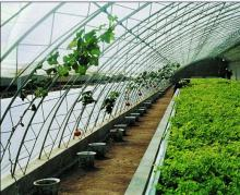 poly tunnel greenhouse