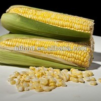 Excellent quality germination whole sweet corn seed