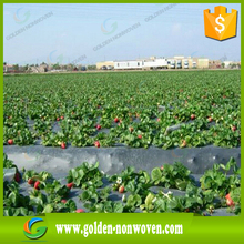 tnt non woven fabric for strawberry cover , agriculture pp nonwoven cloth for grape protection bag