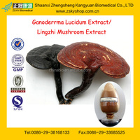 GMP Factory Supply High Quality Ganoderma Extract