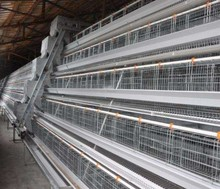 high quality cheap automatic quail cage for sale