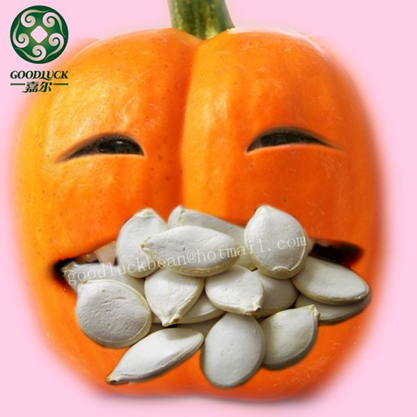 Inshell Pumpkin Snow White Seeds