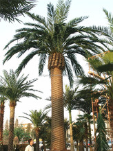 fiberglass trunk UV resistant plastic fake palm tree for outdoor landscaping