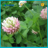 pure natural herbs red clover plant extraction Trifolium Pratense free samples