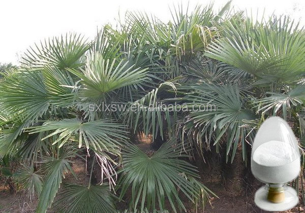 Natural colour plant newest saw palmetto extract fatty acid factory