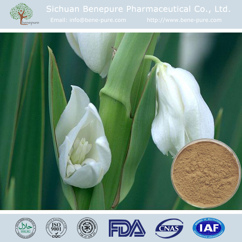 High Quality Yucca root Extract CAS 8047-15-2 Saponin Sapogenins Glycosides