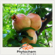 Chinese reducing diabetic product Pomegranate Extract 90% Ellagic acid