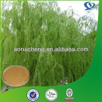 Plant Extract 98% salicin white willow bark