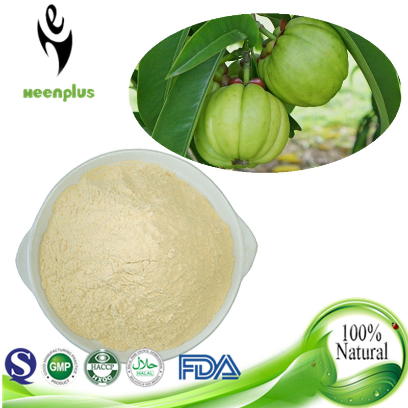 Manufacturer GMP approved Garcinia cambogia Extract 30% 50% HCA