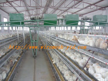 poultry dung removing machinery equipment /layer poultry cages for nigeria/africa