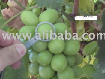 Princess Seedless Grapes