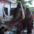 KANO-059 Wildlife Museum Lifelike Animatronic Mammoth
