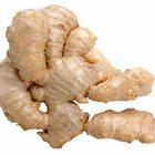Ginger Root/Ginger Extract dark yellow powder