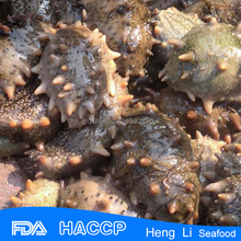 HL011 nature and healthy , sea cucumber price , at reasonable prices , small lot order available