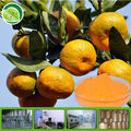 100% purity orange juice concentrate powder