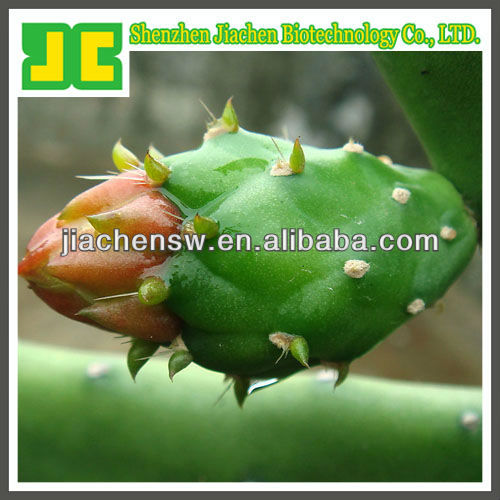 natural Hoodia Cactus Extract powder 6:1,10:1,20:1