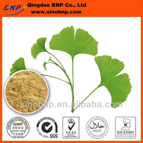 Kosher/GMP BNP 100% Natural High Quality Flavone of Ginkgo Biloba Leaf Extract
