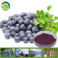 High quality Bilberry fruit powder