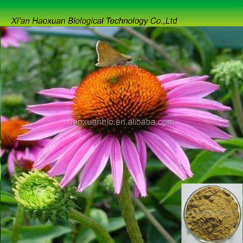 GMP Factory Wholesale Polyphenols 4% Echinacea Purpurea Extract in Bulk