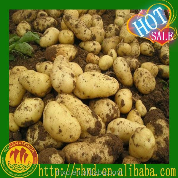 Fresh Potato Price Holland Potato Chip Yellow Sweet Potato Seed