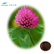 Natural Herbal Supplement Red Clover Extract Isoflavones