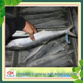 Frozen sea food spanish mackerel fillet