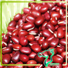 Red bamboo bean with high demand for different markets