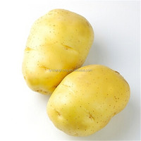HIGH QUALITY HOLLAND YELLOW SKIN POTATO