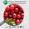 ISO&GMP Factory European Cranberry Juice Extract Powder