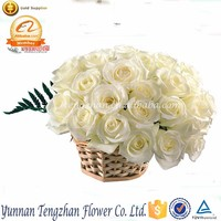 Lady favorite classical good quality send rose