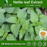 100% Natural Nettle Root Extract , Nettle Extract , Nettle Root Extract powder 4:1,10:1