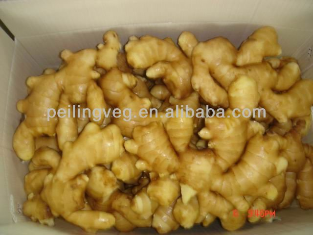 Fresh Ginger price in China 2014