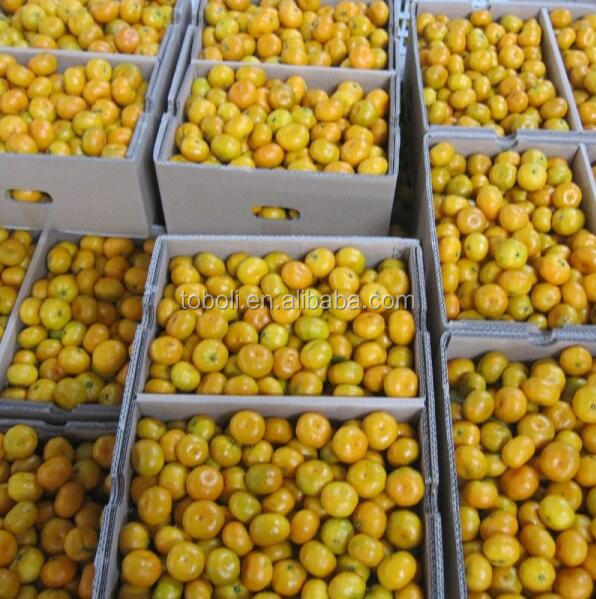2013 honey fresh baby mandarin