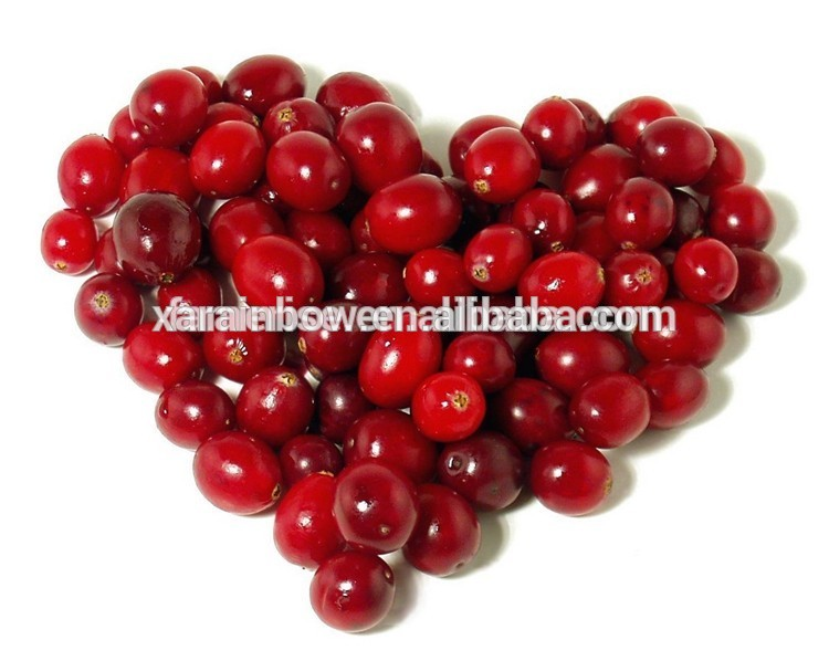 blushwood berry for sale ISO9001 factory supply blushwood berry extract anti cancer herbs cranberry extract powders