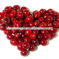 Blushwood Berry For Sale ISO9001 Factory