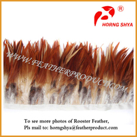 Raw Chicken Feather Material for Purchase