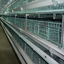 best quality egg production equipment