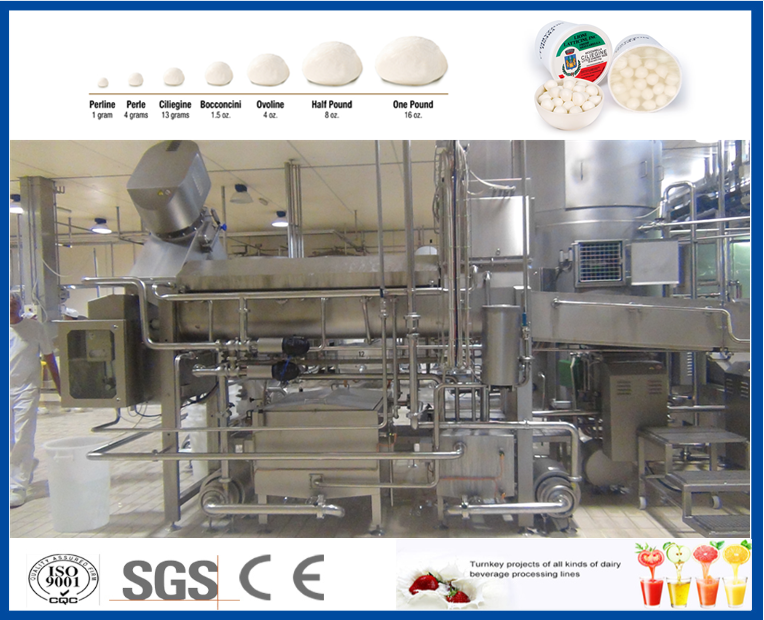 Complete mozzarella dairy cheese processing machine