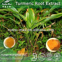 China Supplier Best Quality Turmeric Root Extract Powder 95% Curcumin
