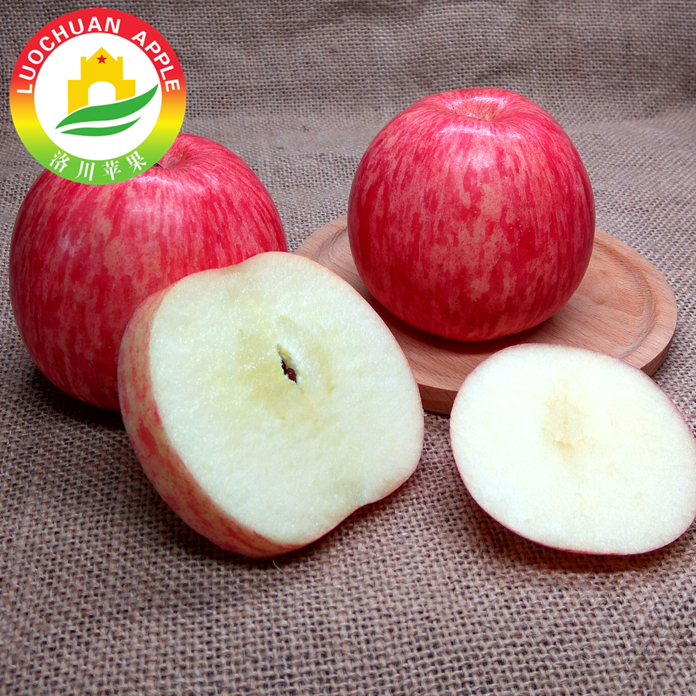High quality LUOCHUAN sweet Fuji apples good farmer fruits