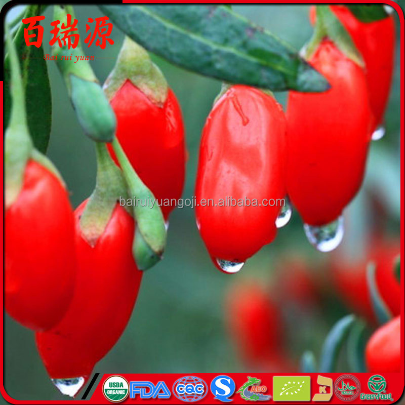 Natural Green Food goji berry antioxidant goji berry allergy goji berry as union subotica makes <strong>u</strong> look more beauty