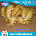 chinese ginger from china anqiu