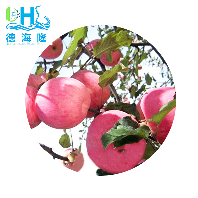 Fresh Fuji sweet apple in china