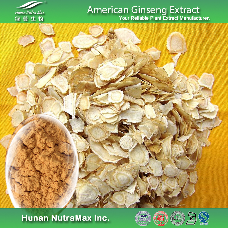 China Supplier American Ginseng Root Extract Ginsenosides 10% HPLC