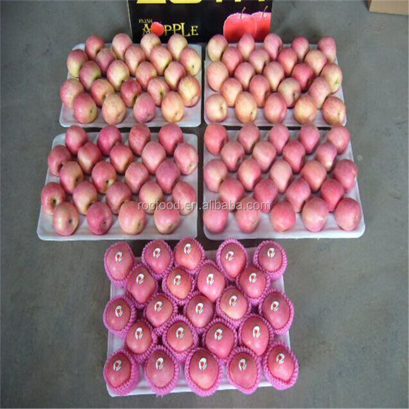 apple fruit wholesale prices fresh apple market prices fuji apple
