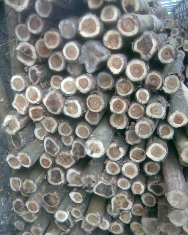 Cheapest price acacia log
