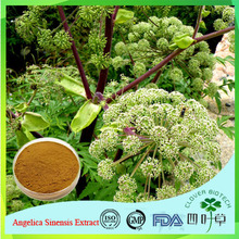 Herb extract Angelica P.E./ Chinese dong quai extract