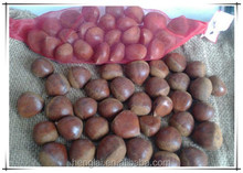buy chestnut/Chinese roasted chestnut brown hair color for hot sale