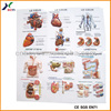 PVC Embossed Sheet 3D Embossed Human Anatomy Charts