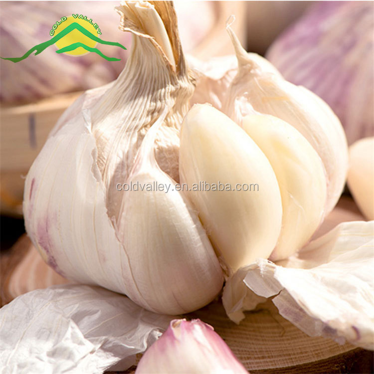 Lowest natural garlic price in China